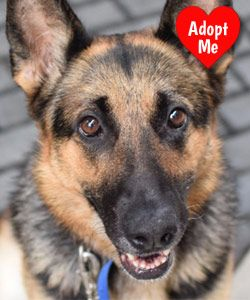 Rescue Dog Of The Month Rescue Dogs Dogs Dog Hacks