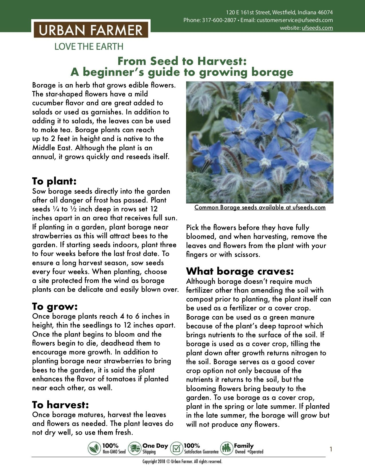 Borage From Seed To Harvest Urban Farmer Starting Seeds