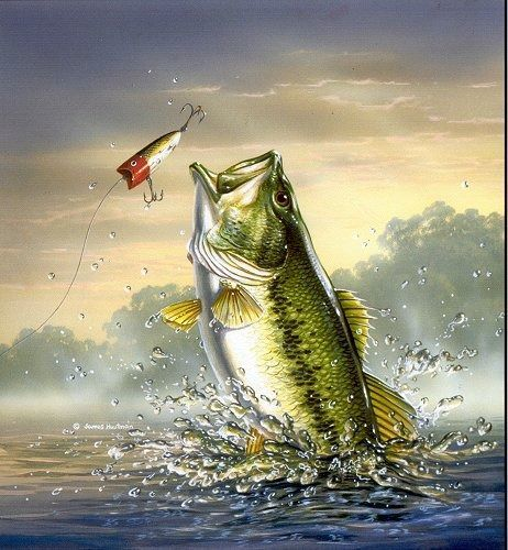 Bass Fishing For Computer Wallpaper