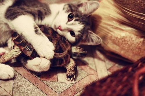 mi adorada tortuga