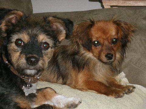 Rolda Romanian Street Dog Rescue Over