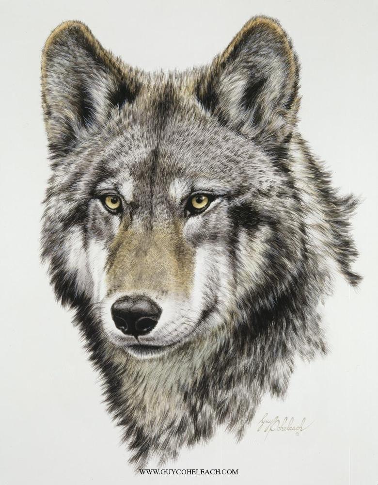 Wolf Head Timber By Guy Coheleach Tattoo Pinterest Loup Loup