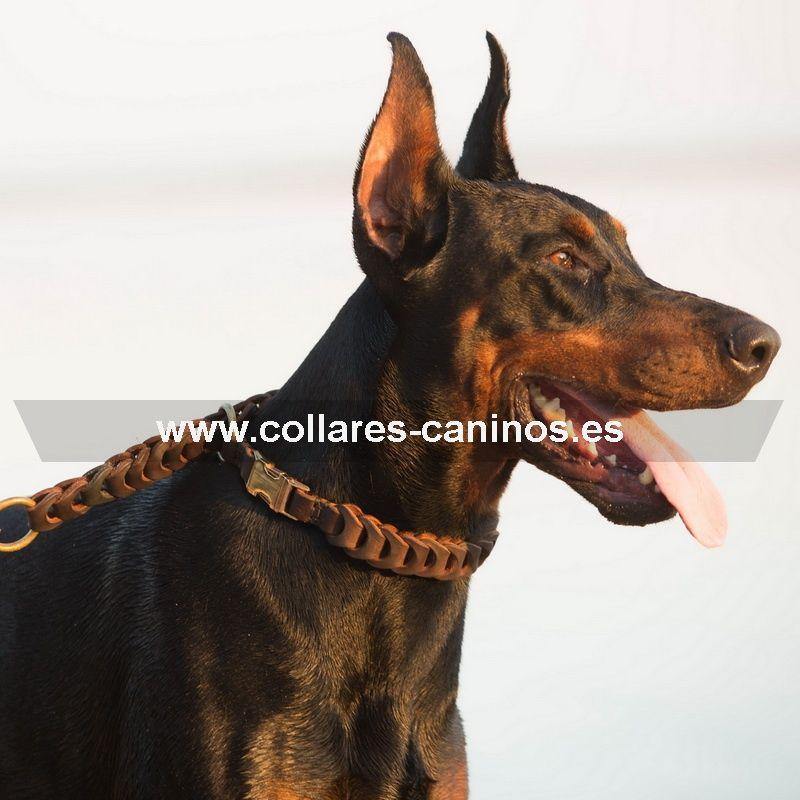 Amplia variedad de #collares para #perros de la raza #Dóberman. http://www.collares-caninos.es/index.php/tienda/productos-por-razas/doberman