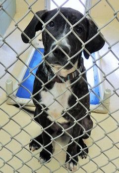 PLZ CLICK N READ N SAVE THIS BABY ASAP!!! HIGH KILL SHELTER! Puppy adopted from kill shelter; returned 24 hours later for puppy behavior