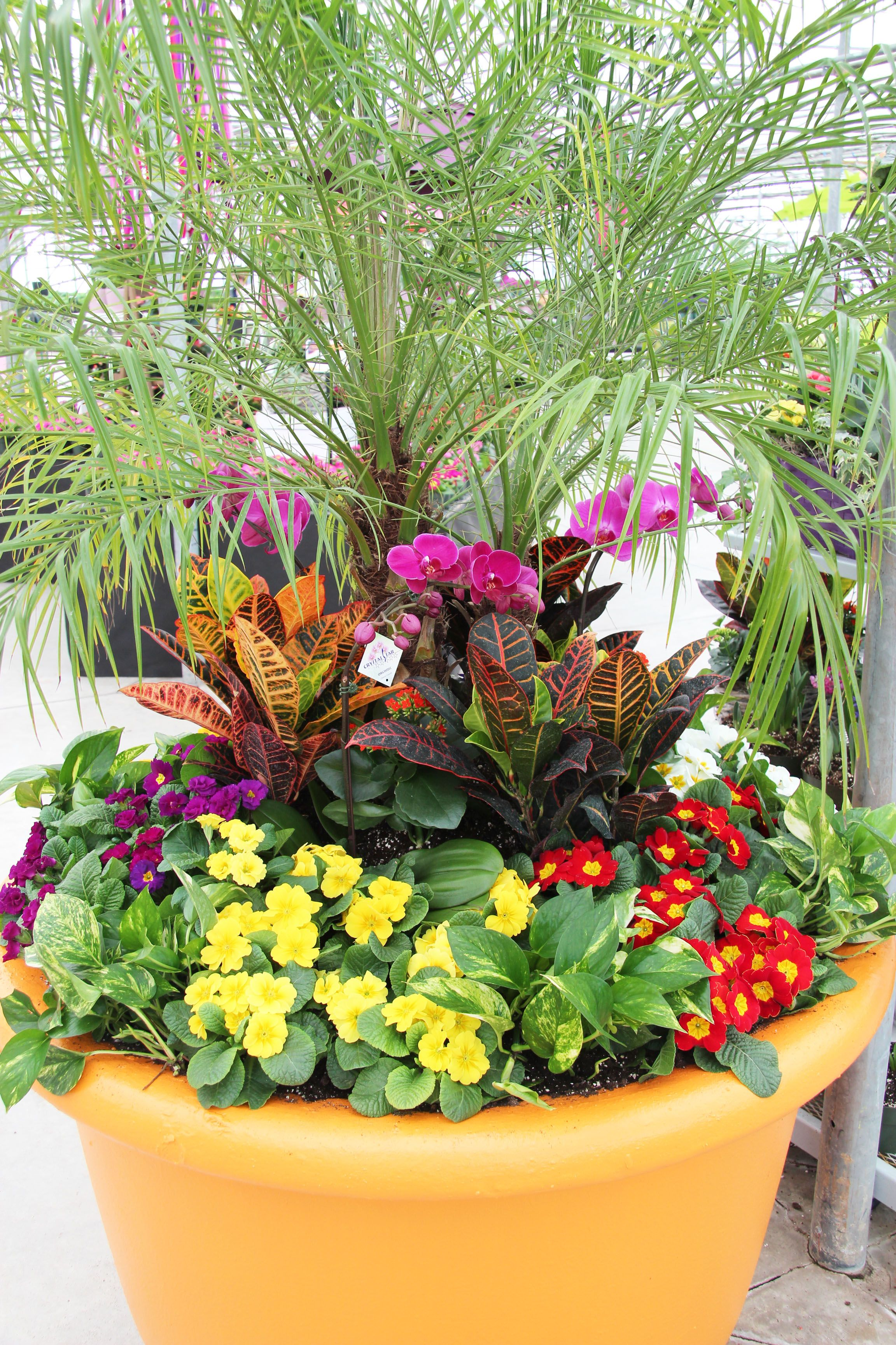 Huge planter with tropical plants | Planting & Gardening ...