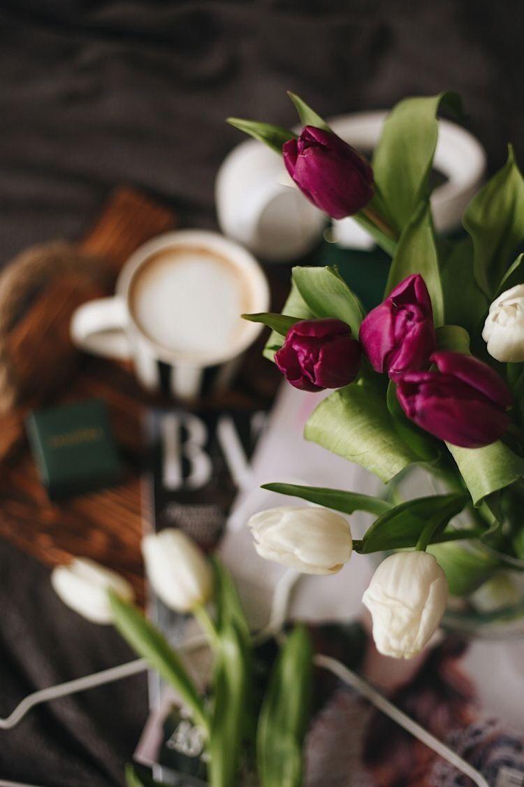 Pin Ot Polzovatelya Mariel Pineda Na Doske Tulipanes S