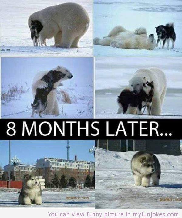 wolf and polarbear jokes for children http www myfunjokes com