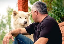 Does Your Dog Respect You Cesar Millan Dog Training Dogs