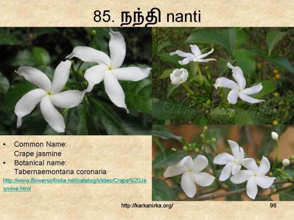 85 நந த Nanti நந த ய வட டம Flower Names Flowers Nature Flowers