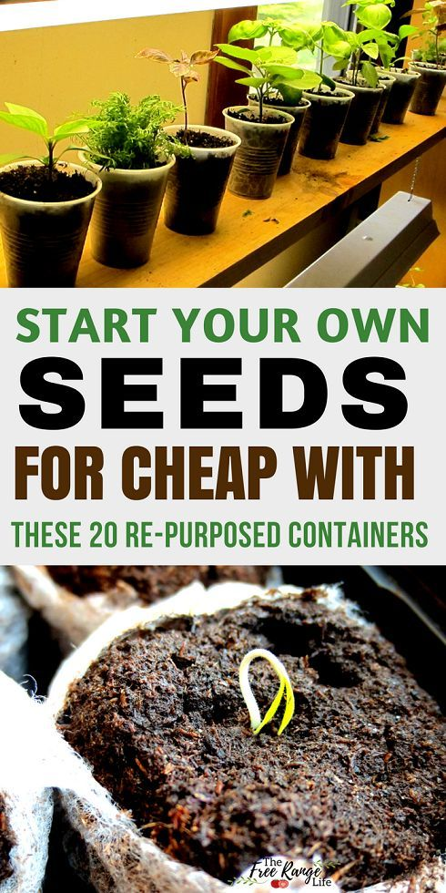 Frugal Gardening Tips Start your own seeds at home for cheap with these 20 repurposed seed starting containers