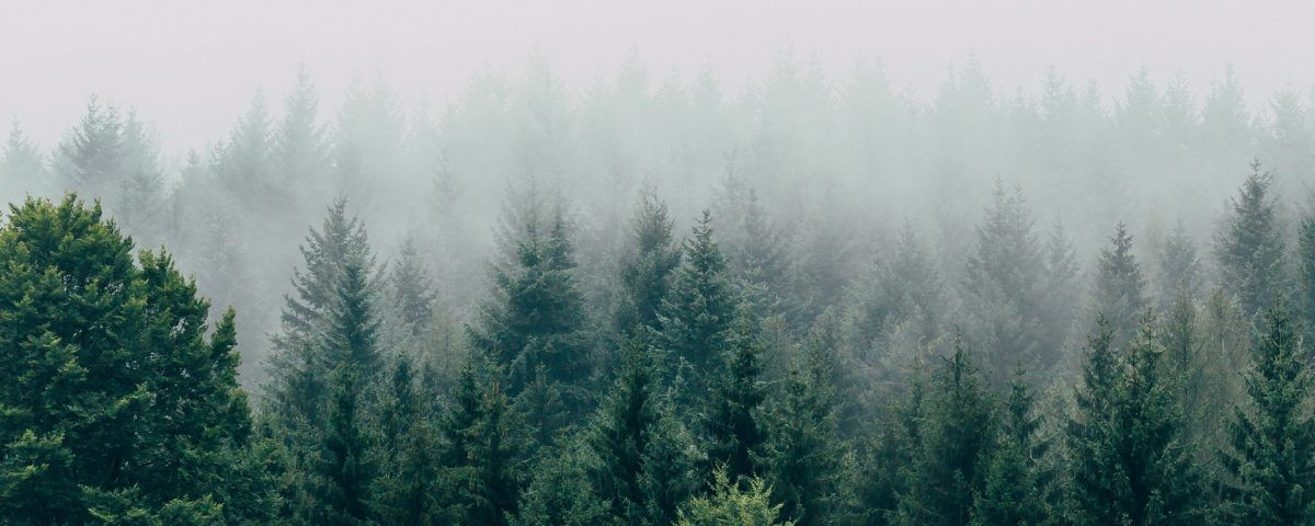 Fog Forest Wallpaper Forest Wallpaper Forest Foggy Forest