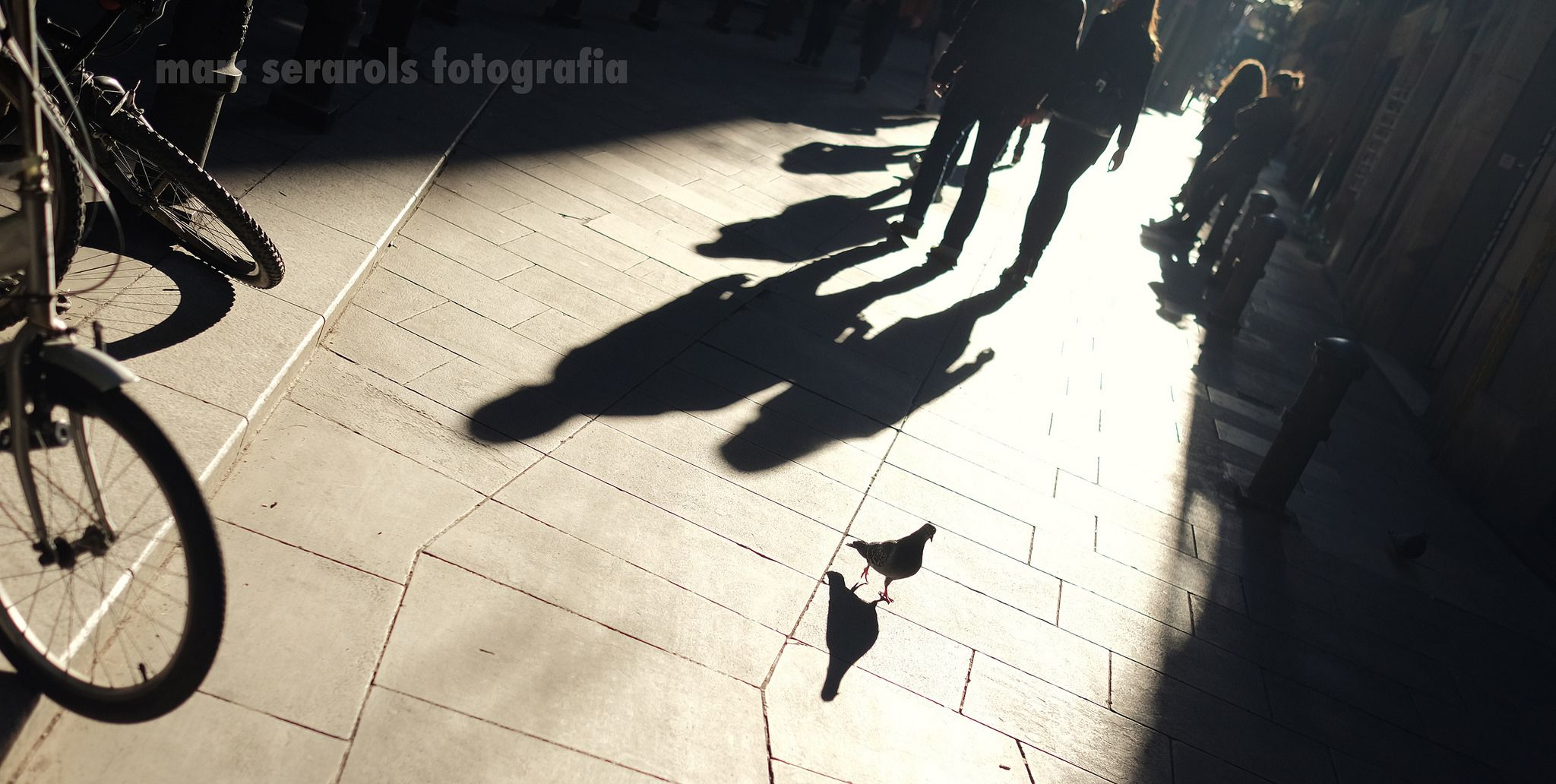 https://flic.kr/p/ChgfWy | xino xano | www.facebook.com/SeracatPhotography/
