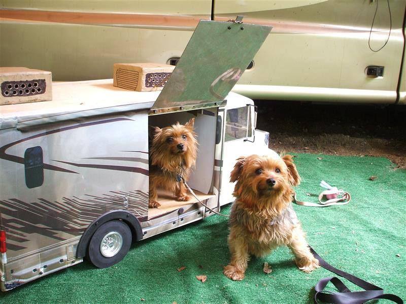 Cool little doggie rv