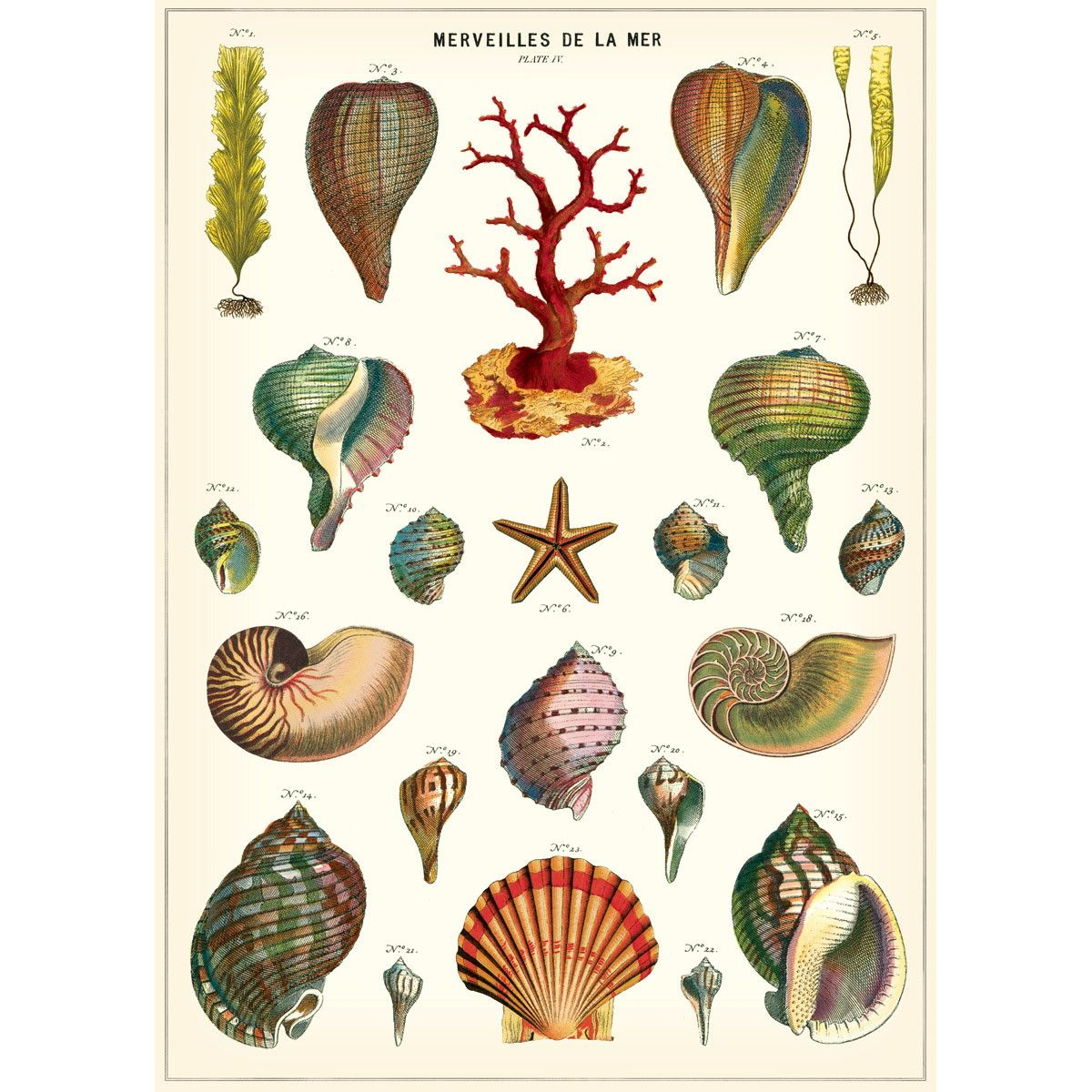 1898 Sea Creatures Poster Antique Nature Journal A4 Size Vintage Wall Art