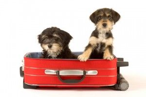 The Cheshire is a pet-friendly hotel, and our commitment to our guests extends to their four-legged companions. Simply let us know you'll be traveling with a pet and our Director of Pet Relations will furnish your Specially Designated Pet Friendly guest room with amenities provided by Nestle Purina