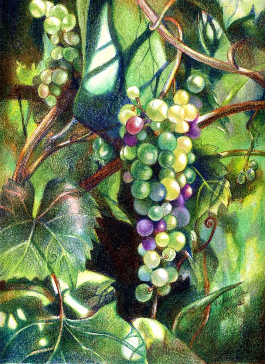 Veronica Winters - Grapes (Colored Pencil) | Colored Pencils ...