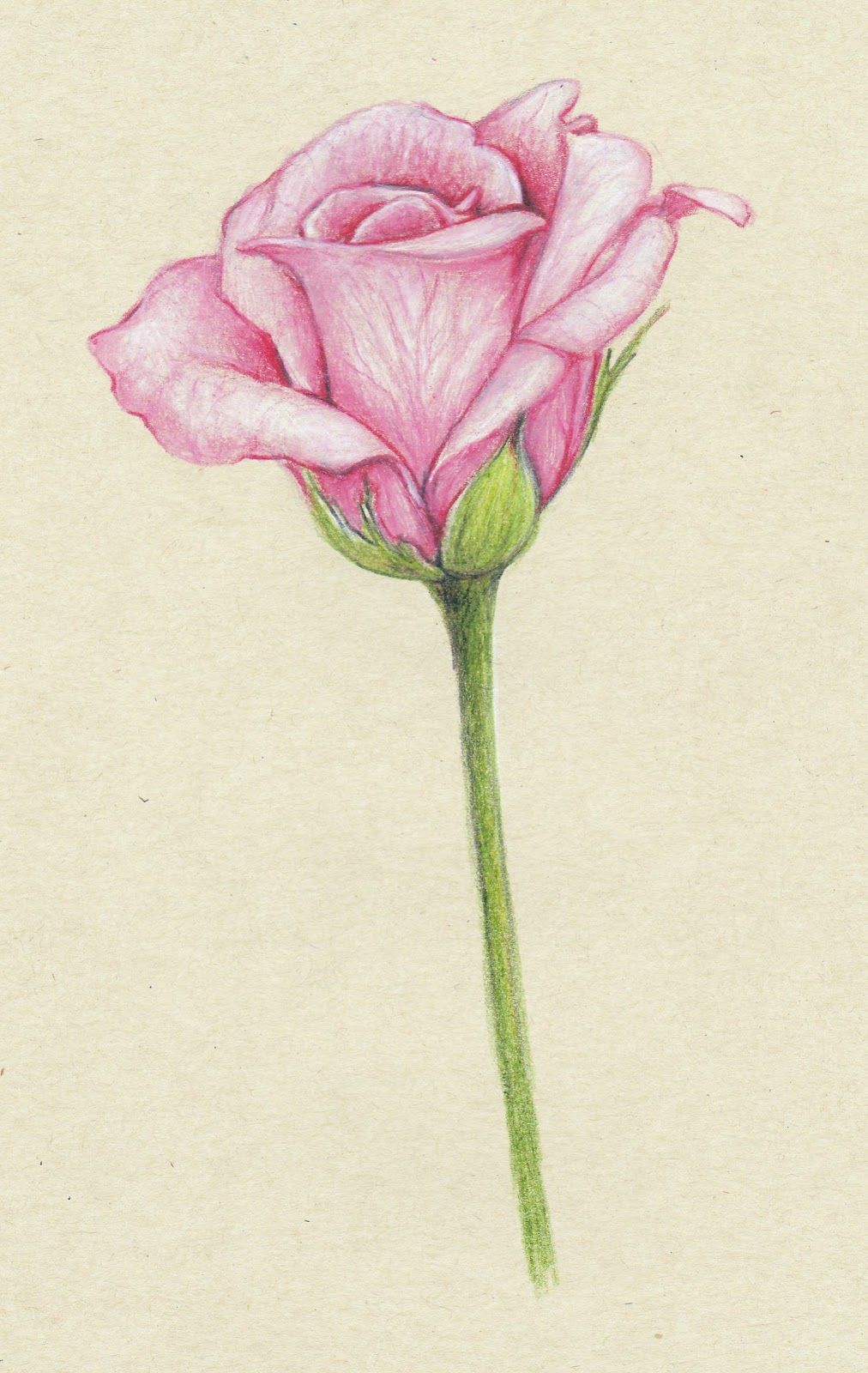 Pencil Drawings Of Flowers Pink Roses Wallartroad Pencildrawings Flowers In Color Pencil Pencil Drawings Of Flowers Beautiful Flower Drawings Pen