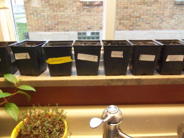 Spring Indoor Planting - #Seed #Garden