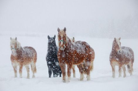 Image from https://simplymarvelous.files.wordpress.com/2008/01/horses-in-snow2.jpg?w=470.