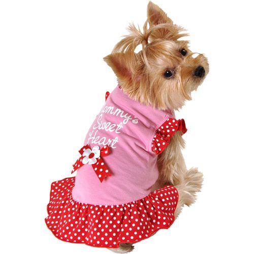 Ropa Para Perros Pequeños Cuál Es El Mejor Vestuario Para Perritos