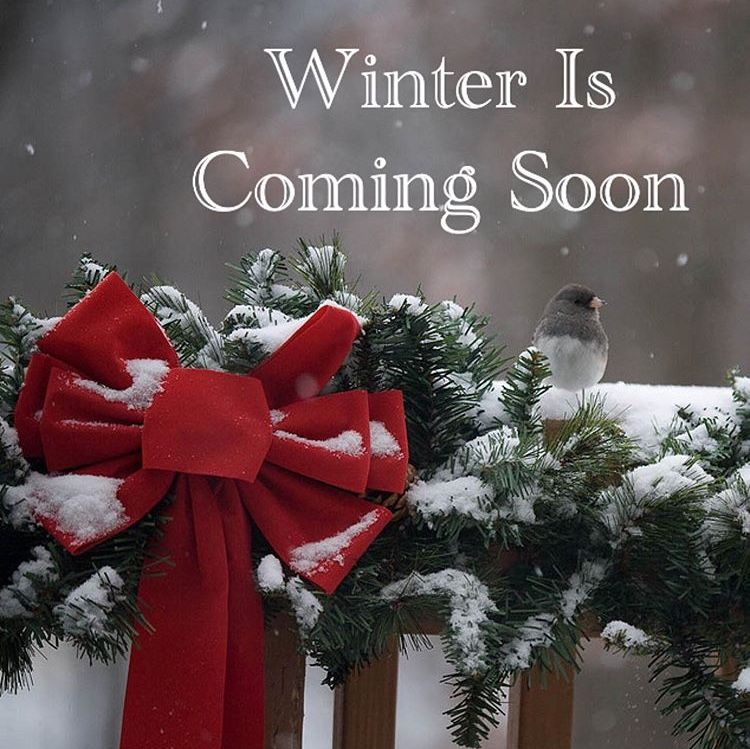 Pin By Paula Papadopoulo On Christmas Decorating In 2020 Christmas Wreaths Christmas Decorations Snow Holidays