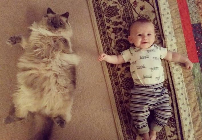 At four months old my nephew has finally achieved gross cat parity.
