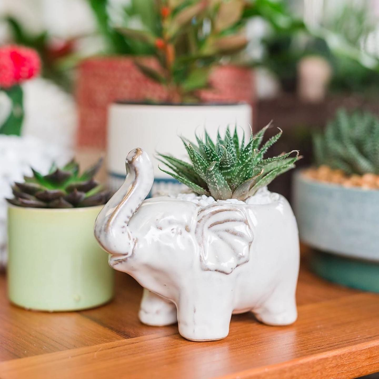 How cute spruce up your home with succulents this