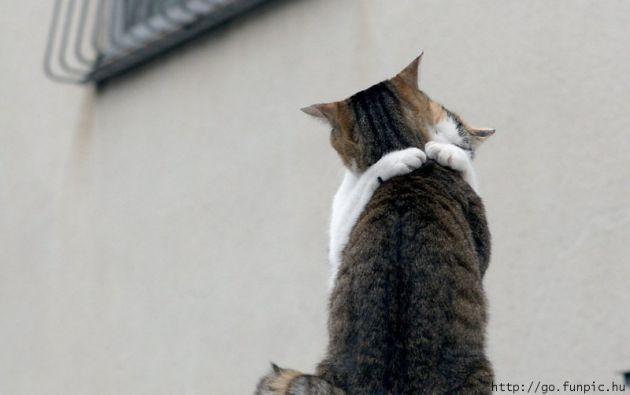 CATS LOVE HUGS