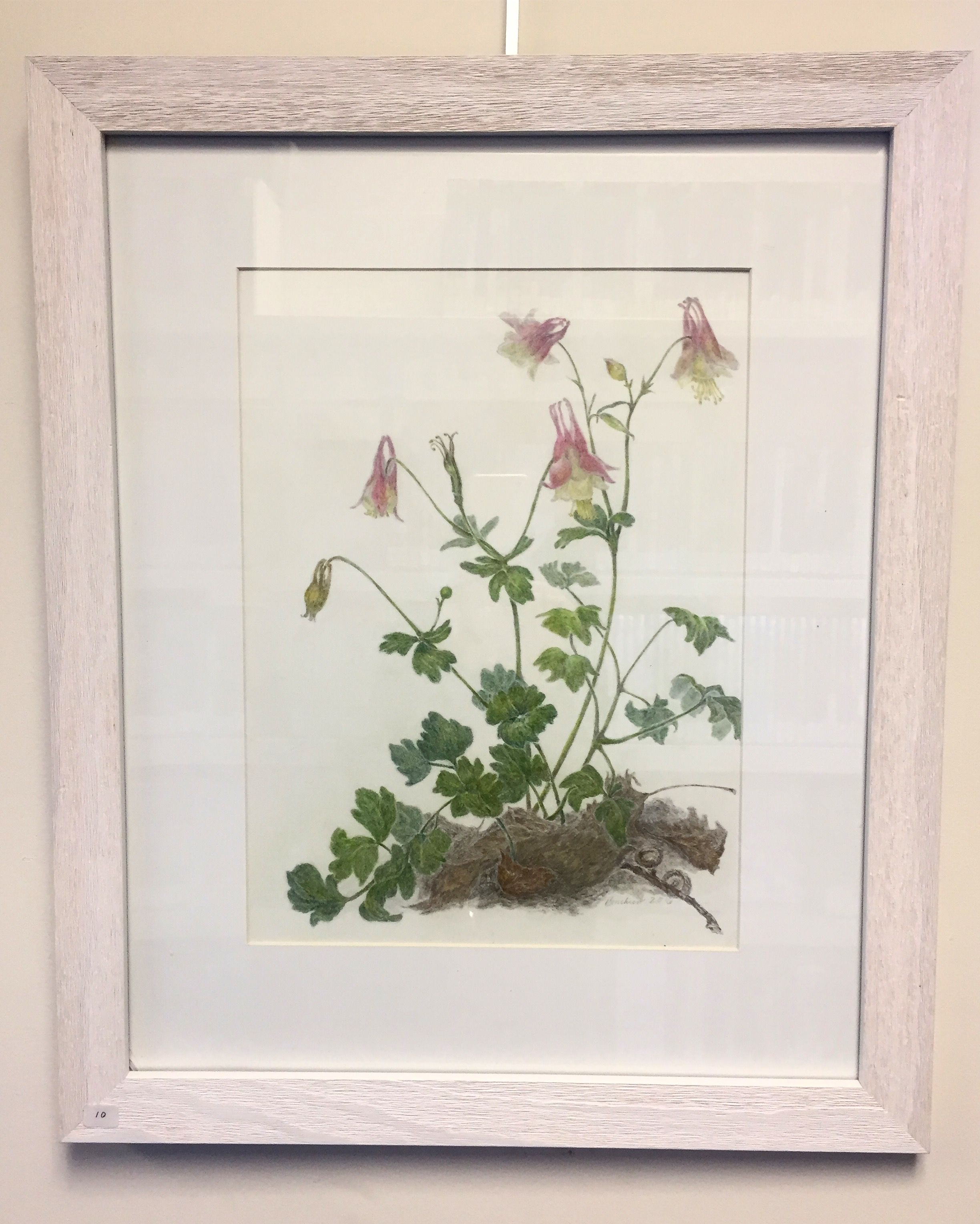 "Stop by anytime this month to view ""Native Plants of Long Island in Colored Pencil"" by Diane Boucher, Stony Brook resident & founder of the @AmericanSocietyofBotanicalArtists. She also exhibits at Gallery North & The Long Island Museum."