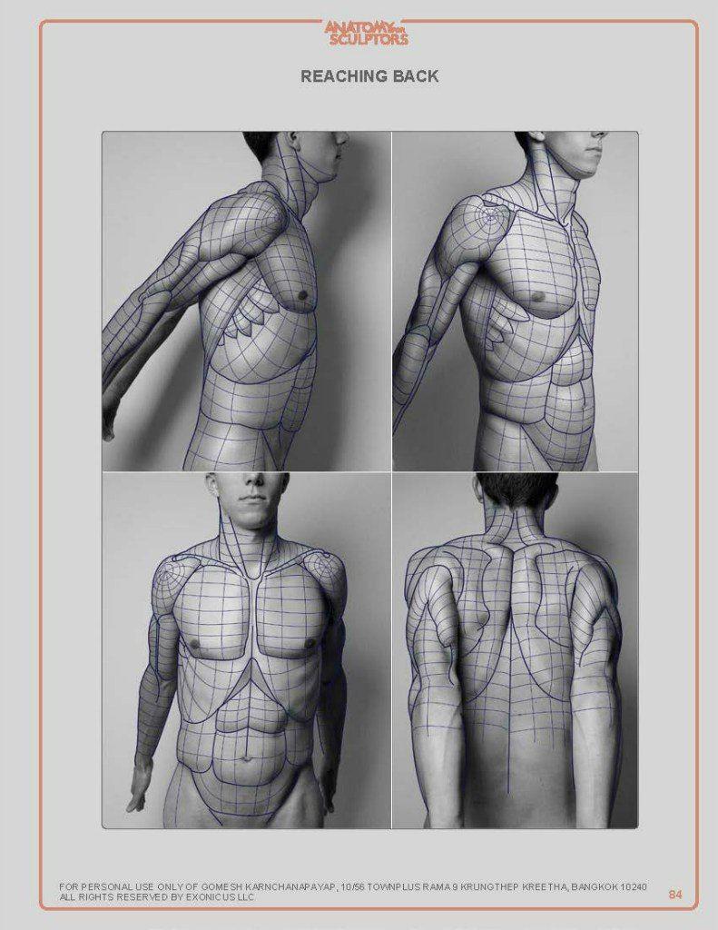 Marina Suzdaltseva   VK   Anatomy   Pinterest   Anatomy