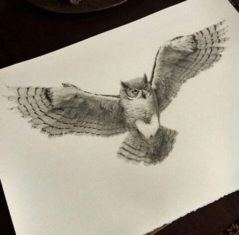 Volando Dibujos Buho Dibujo Tatuaje Buho