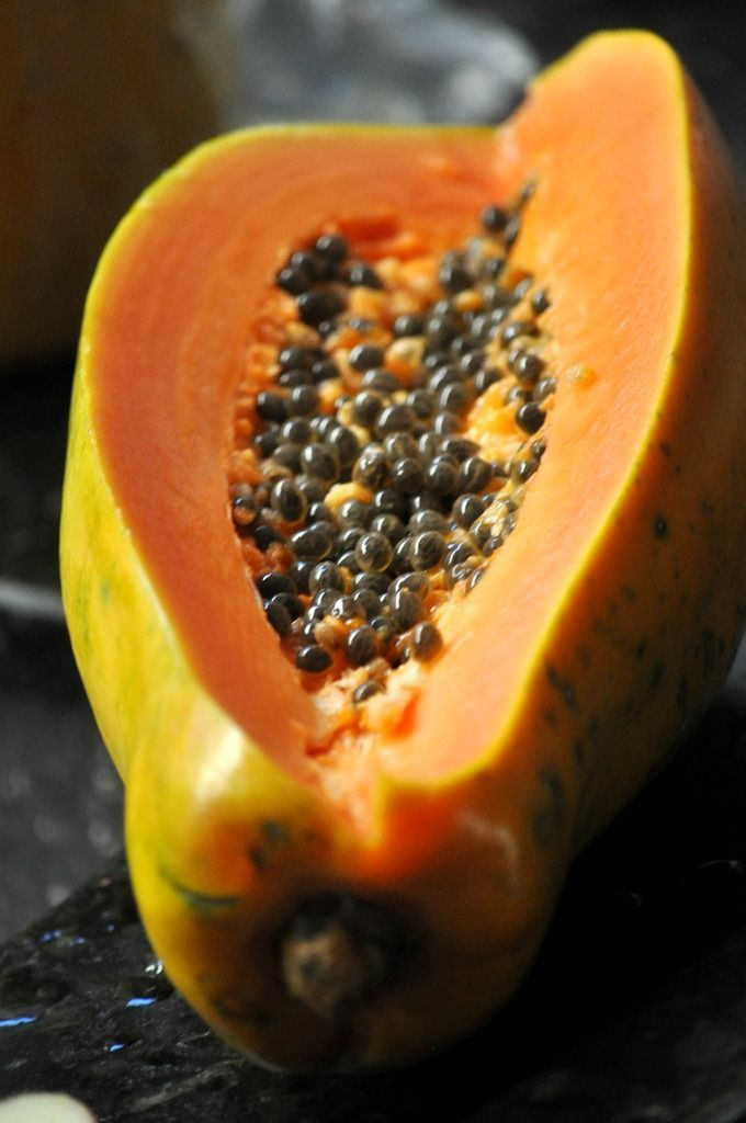 Papaya Züchten