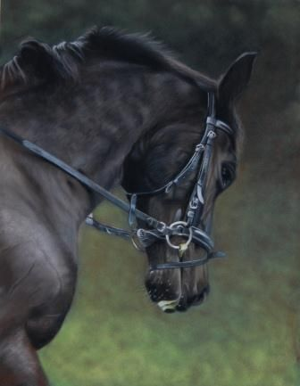 Horse portrait by hollycottagefineart.com