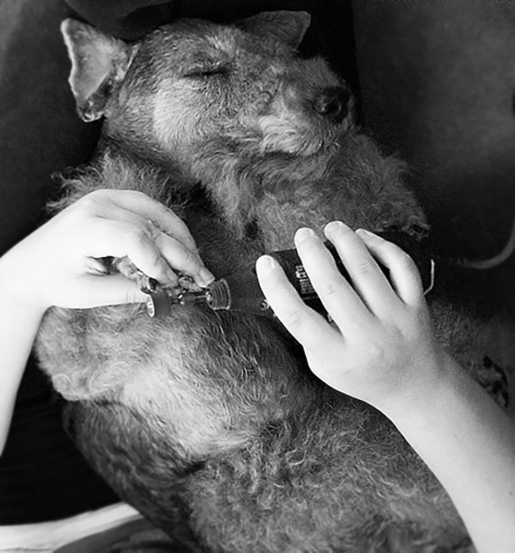 How to Dremel Dog Nails Miles & Emma Alfie Dog nails