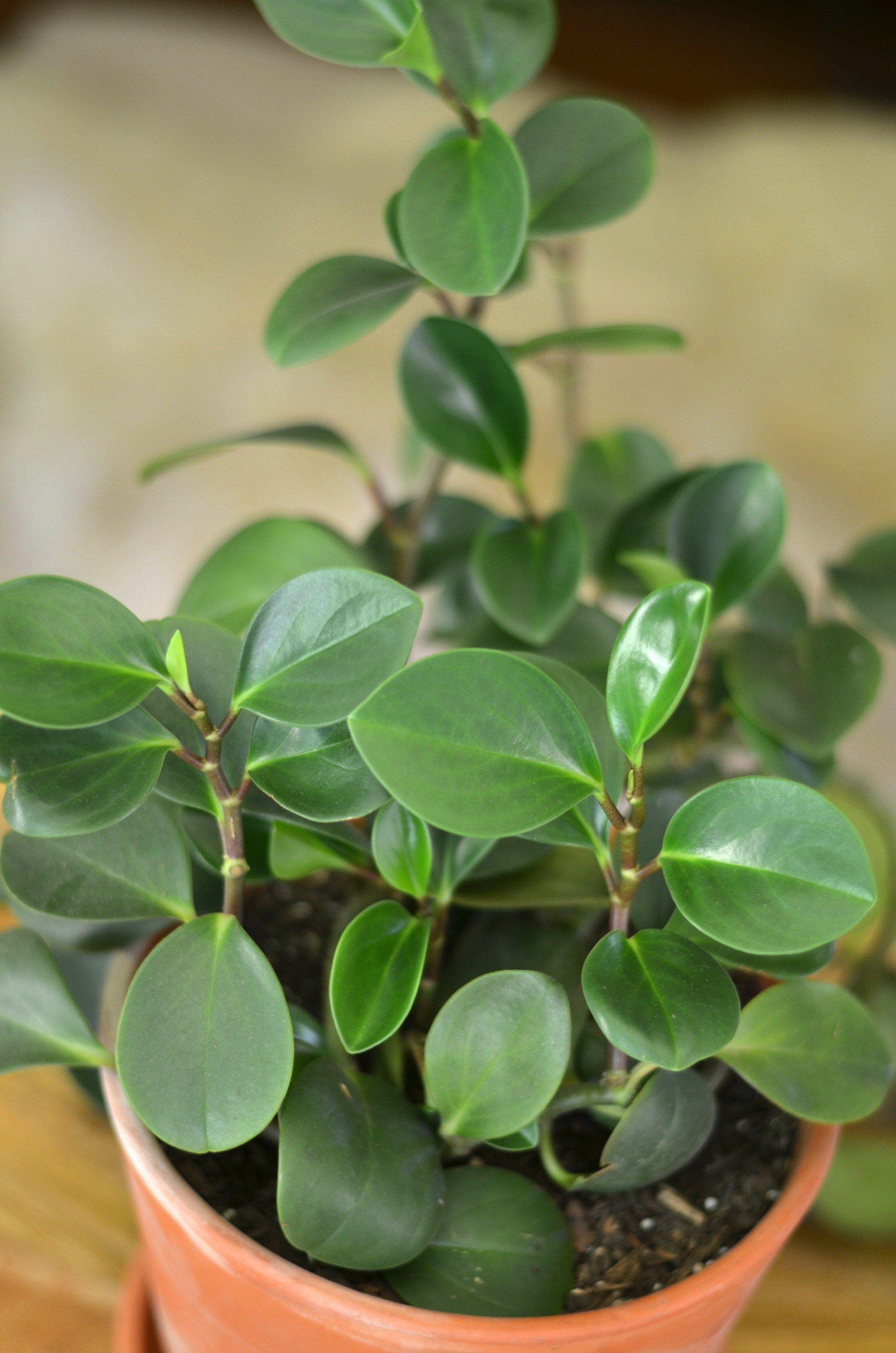 Plants for Beginners Shavonda Gardner Plants, Plant care