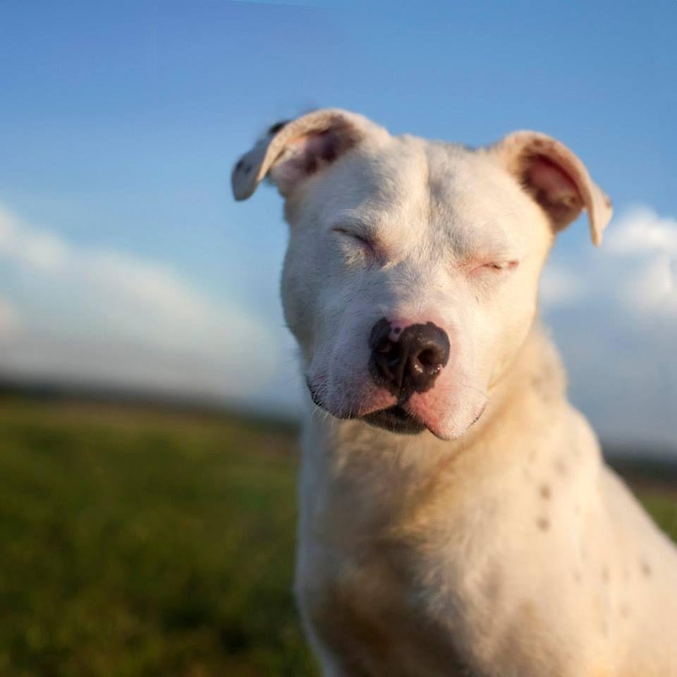 The Landfill Dogs Ternurita y Animales