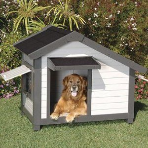 Unique Dog Houses Gallery Spoil Rover With A Dog House He Can
