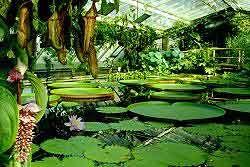 Attrayant Botanical #Garden #Berlin