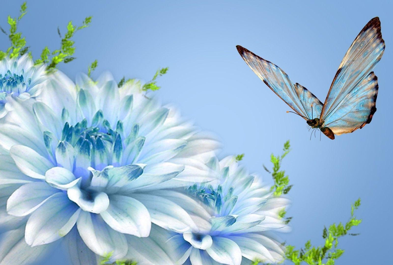 Blue Butterfly Blue Flower Wallpaper Butterfly Wallpaper Wallpaper Nature Flowers