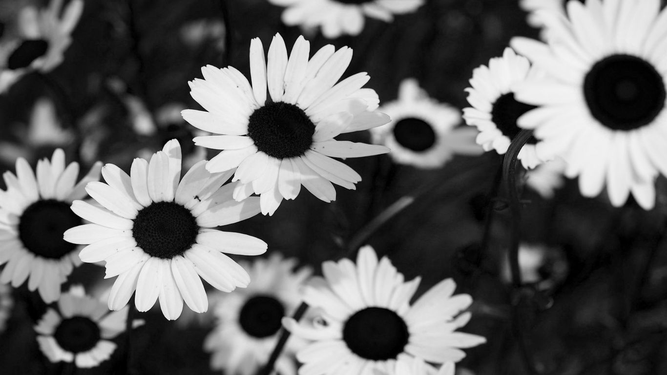 Flower Tumblr photography black and white