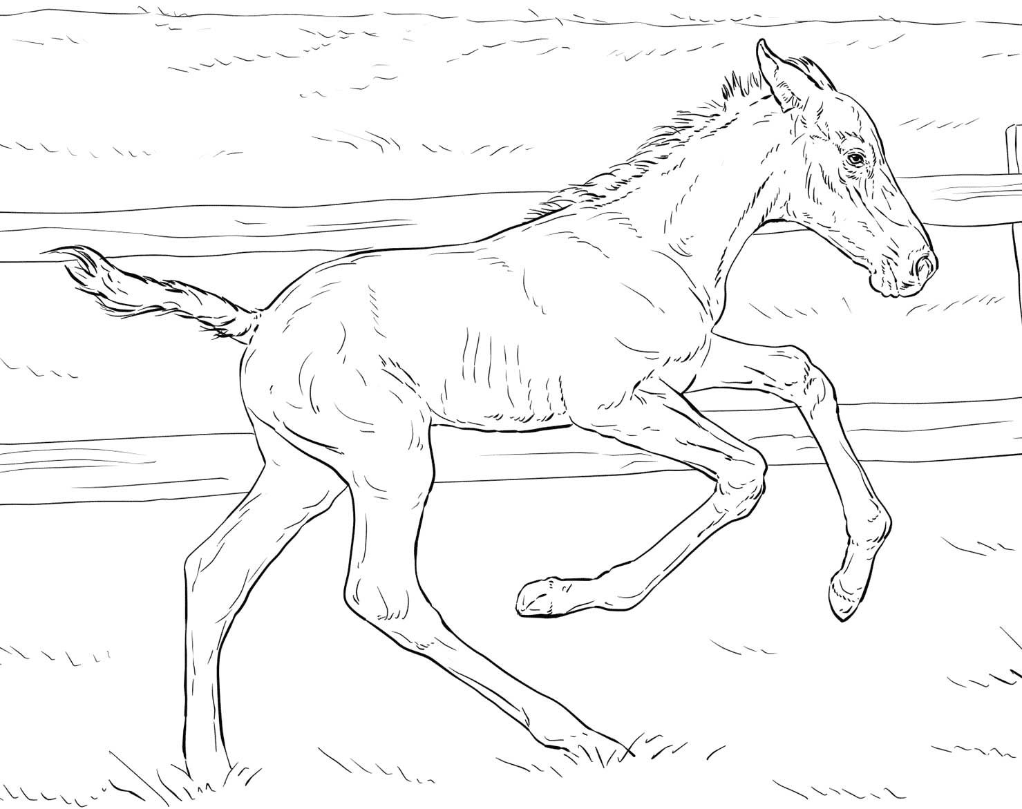 Bucking Foal Coloring Page Horse Coloring Pages Horse Coloring Coloring Pages