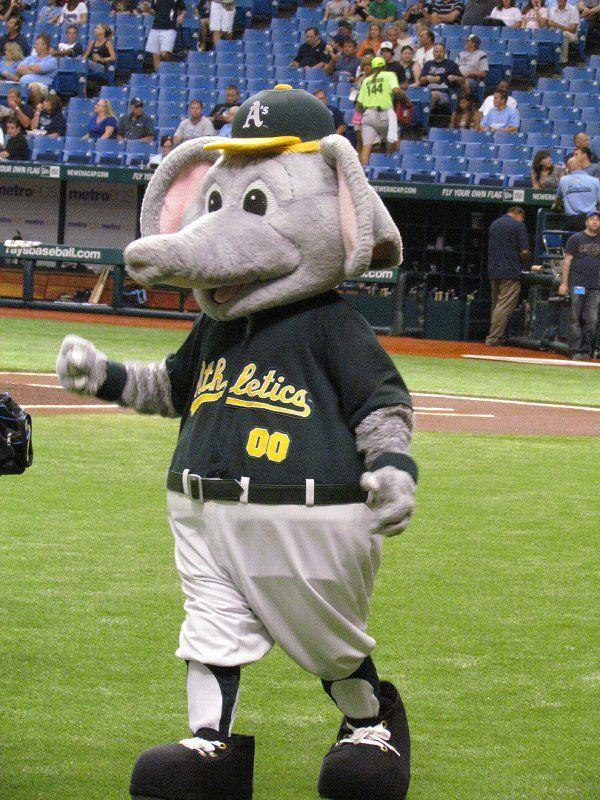 Stomper Oakland A S Mascot Mascot Baseball Mascots Mascot