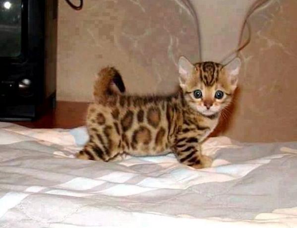 Definitely one of the cutest kittens I've ever seen/// Looks like Emma's cat