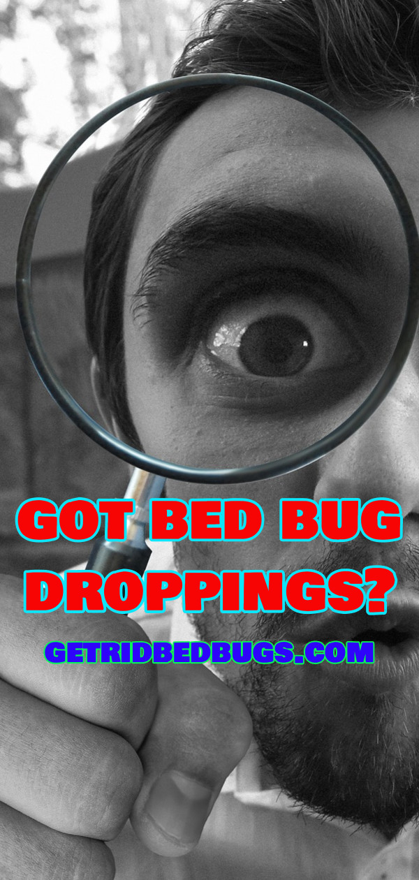 Bed Bug Droppings Gross Facts You Should Know Get Rid