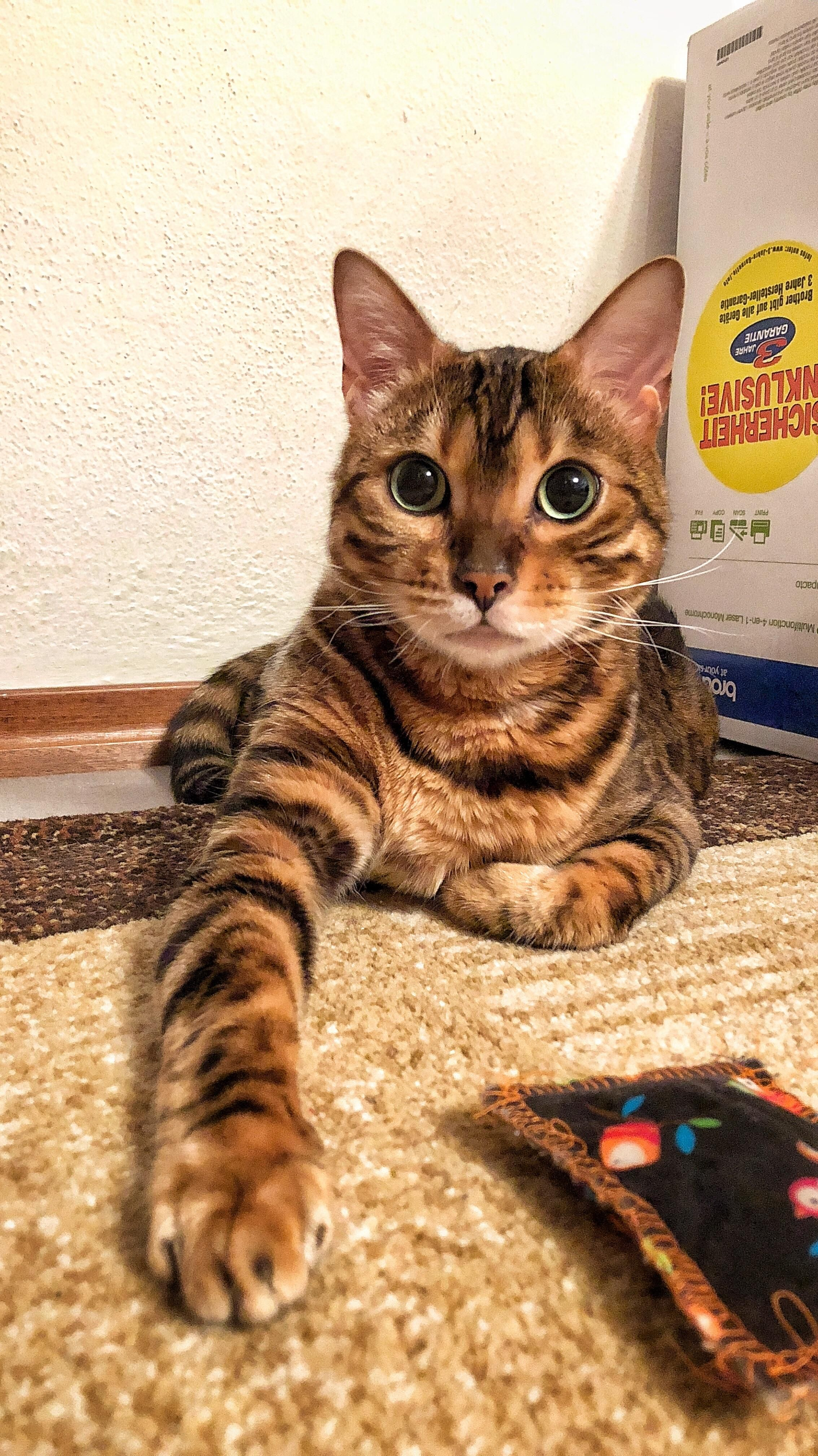 Good Boy Hello There Bright People Are You Catlover Or Have You Any Pretty Cats I Think You Love A Kitty Face So Follow Our Boards Cute Cats Kittens Cats