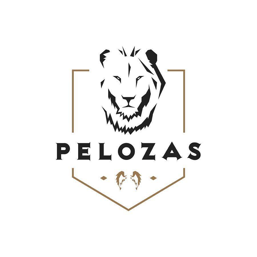 Logo Design For Pelozasllc Logo Startup Startuplife Logomaker Graphicdesign Branding Branddesign Brand Logo Design Branding Design Web Design Agency