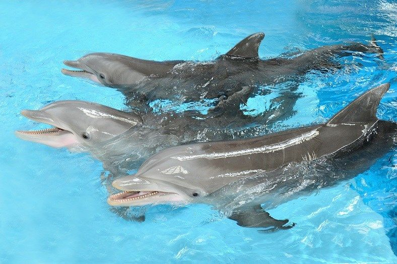 Newborn dolphin calf dies at Brookfield Zoo - The Chicago Zoological Society announced a male dolphin calf died at birth on Friday.