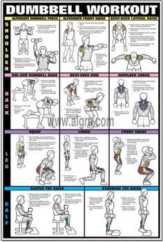 dumbbell shoulder back  leg workout poster  dumbbell