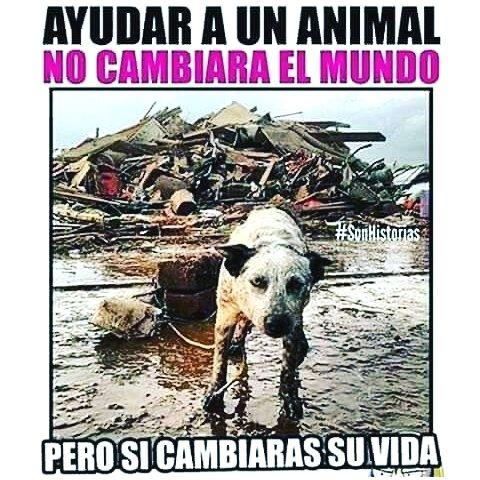 Pin De Thania L Velle D Arnot En Verdaderos Leales Y Grandes Amigos En 2020 Animales Frases Mascotas Animales