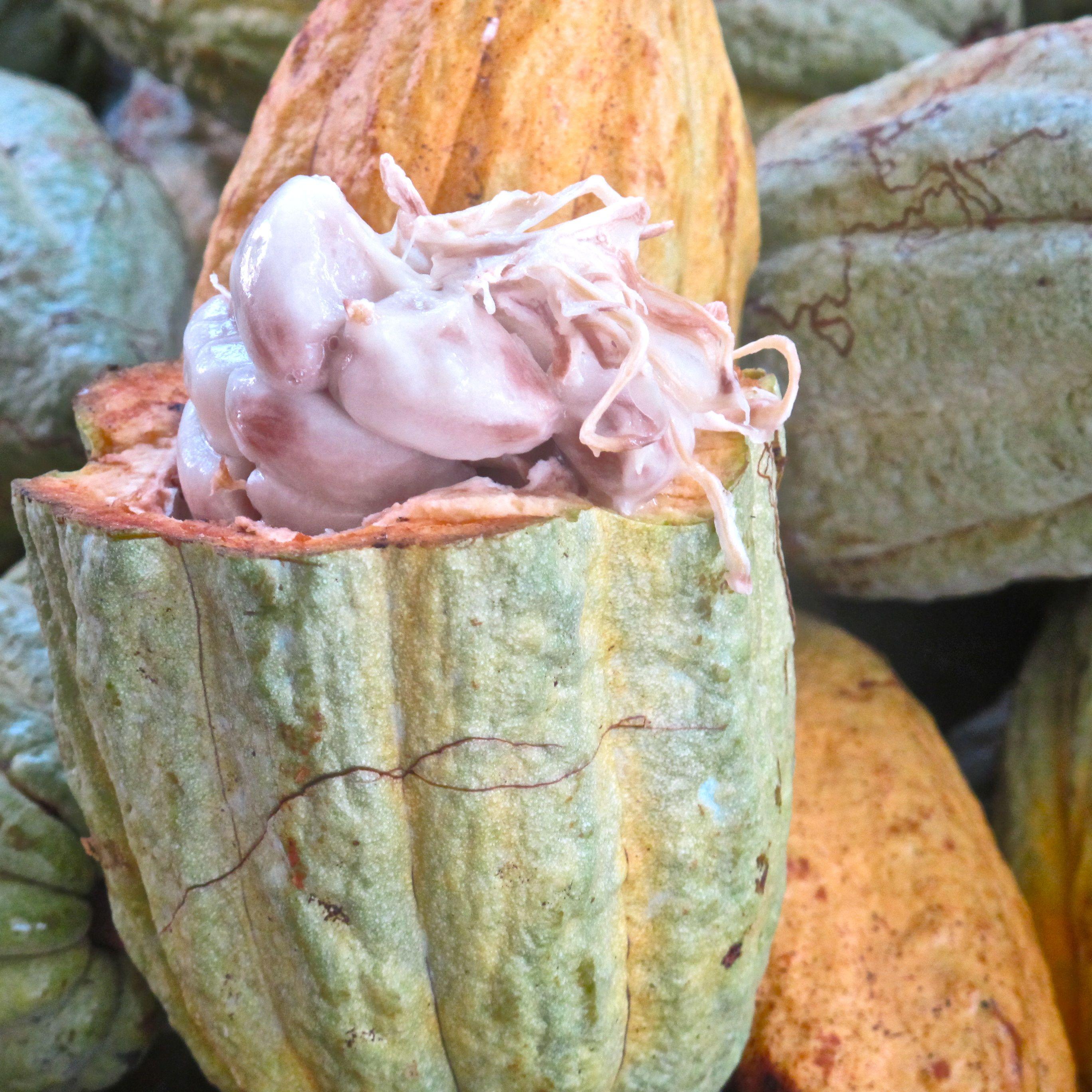baba de cacao